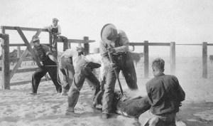 moor-67d-sam-lewis-and-j-d-callaway-branding-cattle