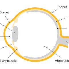 Parts Of The Eye Diagram And Function Honeywell Thermostat Rth2300b Wiring Eyes Protecting Sight Sightsavers