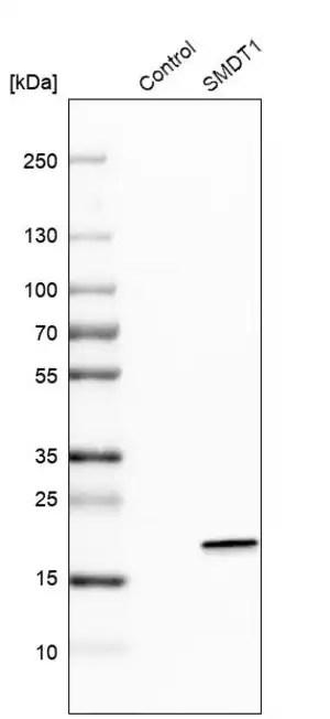 Anti-SMDT1 antibody produced in rabbit Prestige Antibodies