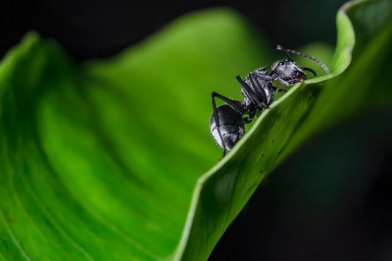 ant-biology-blurred-background-2258499