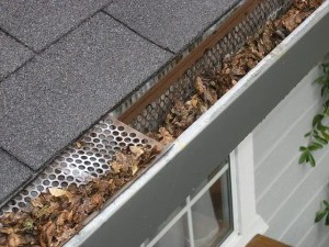 gutter mosquito control