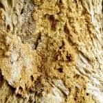 termite damage sigma pest control