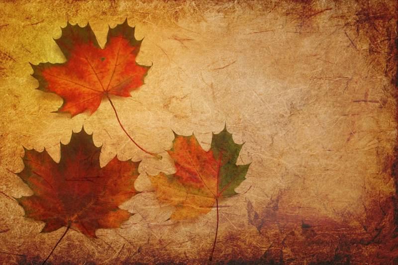 Además de con el marrón, el color naranja se asocia al otoño