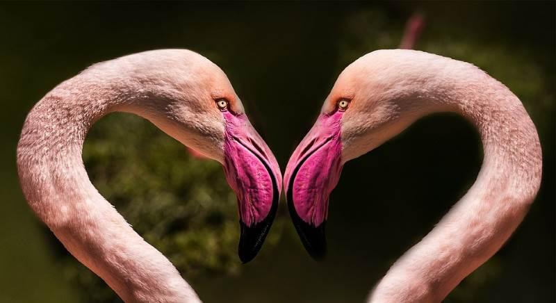 El amor es el principal significado del color rosa