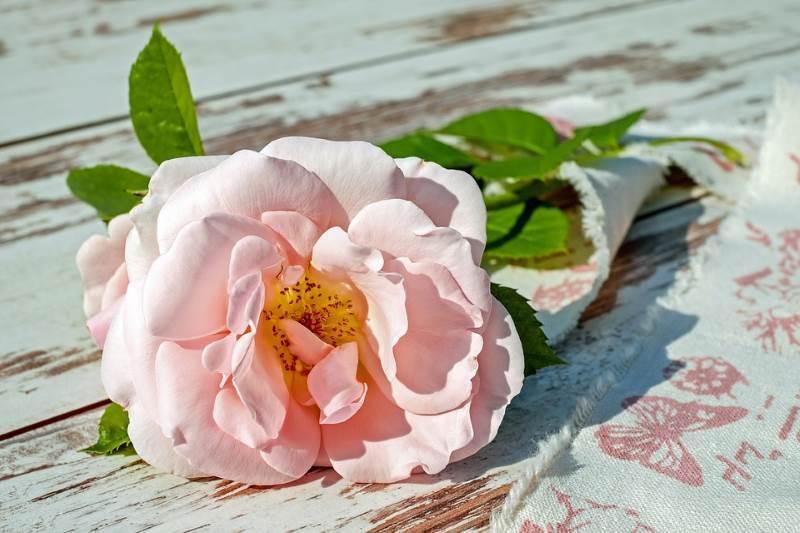El rosa es un color que tiene una flor con su mismo nombre