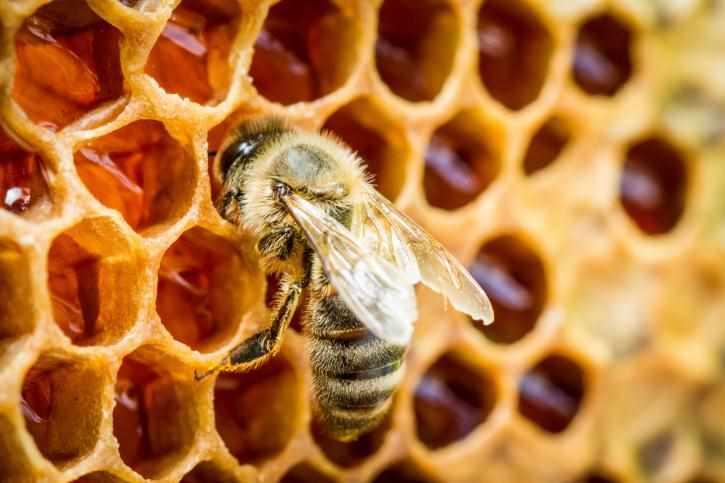 ejemplo del color miel