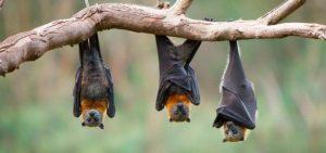 ▷ Sonhar com Morcego -【IMPERDÍVEL】