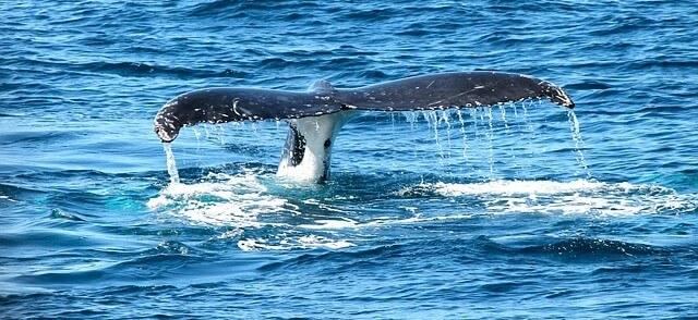 baleia tentando me pegar