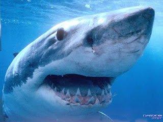 ▷ Sonhar com Tubarão【Interpretações Reveladoras】