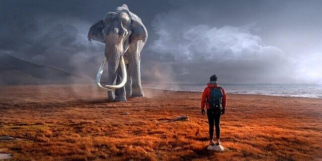 elefante atrás de mim