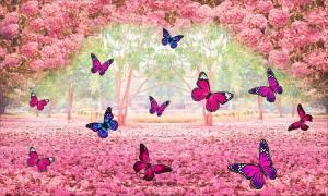 Significado de borboleta