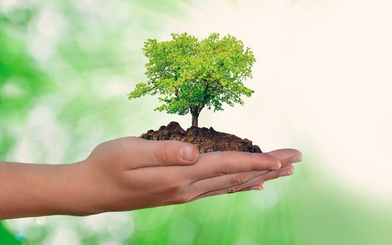 Frases Sobre o Meio Ambiente
