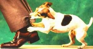 ▷ Sonhar com Cachorro Mordendo【Interpretações Reveladoras】