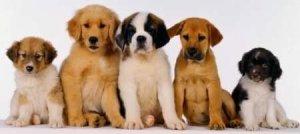 ▷ O que significa Sonhar com Cachorro 【IMPERDÍVEL】