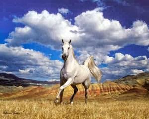 ▷ Sonhar com Cavalo Branco – Interpretação Reveladora