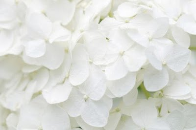 ▷ Sonhar com Branco – Significados Ocultos