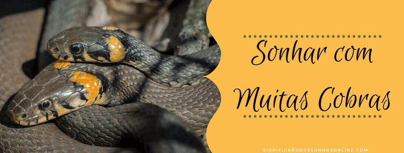 ▷ Sonhar com Muitas Cobras 【Tudo o que você precisa saber】