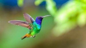 A Lenda Do Beija-flor Que Pode Mudar o Significado Que Você Dá à Vida e à Morte