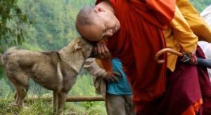 7 Dicas De Um Monge Budista Para Limpar Sua Casa De Energias Negativas