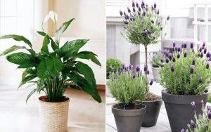 Você Quer Começar 2019 Com Boa Sorte e Muito Dinheiro?Você Só Tem Que Colocar Algumas Dessas Plantas Em Sua Casa