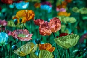 Conheça Os Poderes De Cura Espiritual De Algumas Ervas, Plantas e Chás