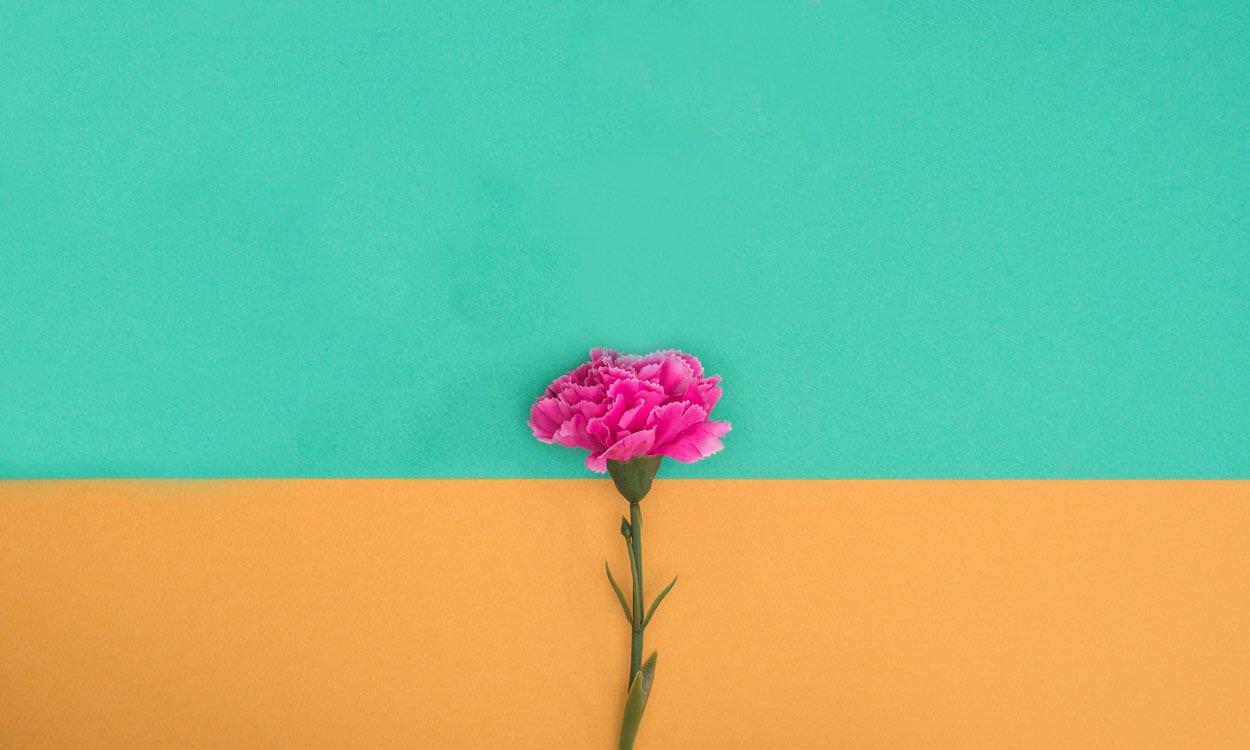 6 Hábitos De Gratidão Que Vão Transformar Sua Vida