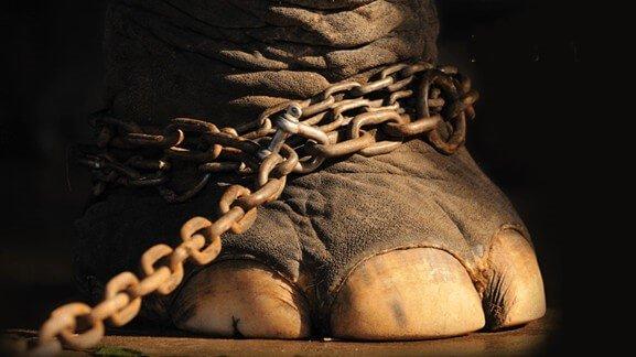 O Elefante Cadeado – Uma Parábola De Jorge Bucay Para Refletir