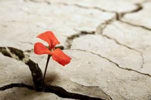 8 Histórias Divertidas e Cheias De Otimismo Sobre a Vida
