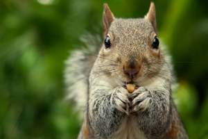 ▷ Sonhar Com Esquilo 【O que isso significa?】