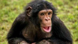 ▷ Sonhar Com Macaco【Jogo Do Bicho】