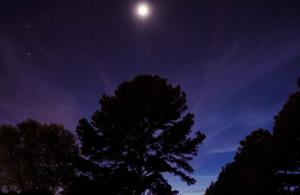 ▷ 25 Recados De Boa Noite Para Enviar Para Pessoas Especiais