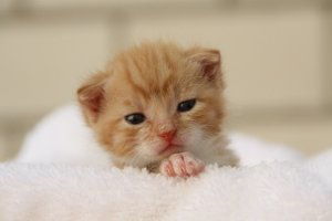 ▷ Sonhar Com Filhote De Gato 【O significado vai te surpreender】