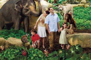 ▷ Sonhar Com Zoológico 【É mau presságio?】