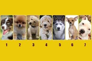 Qual cachorro você escolhe? Se surpreenda com o que você vai descobrir sobre sua personalidade!