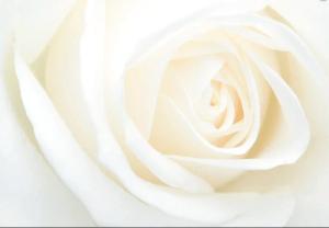 ▷ Sonhar Com Rosa Branca 【É Morte?】