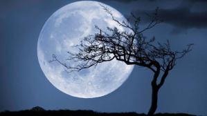 ▷ Sonhar Com Lua Cheia 【É Bom Presságio?】