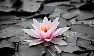 ▷ Flores Significado Espiritual (Tudo O'que Você Precisa Saber)
