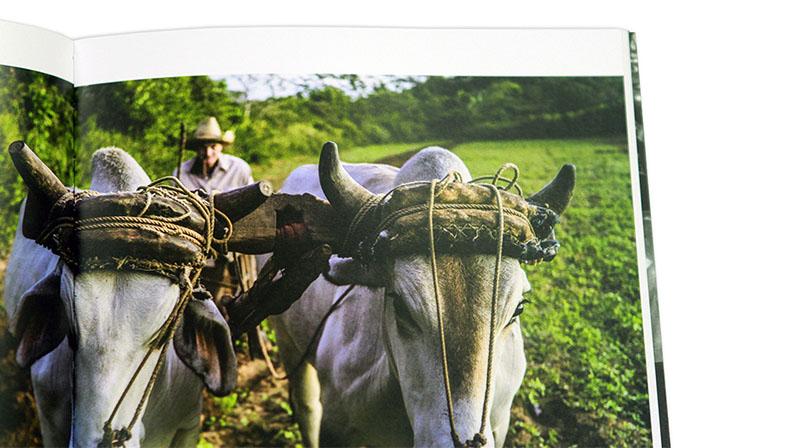 detalle Catálogo II Certamen Signo editores Photo