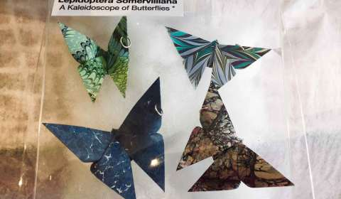 Lyn Brown, Butterflies