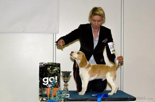 Puppy BIS, 4th place, beagle