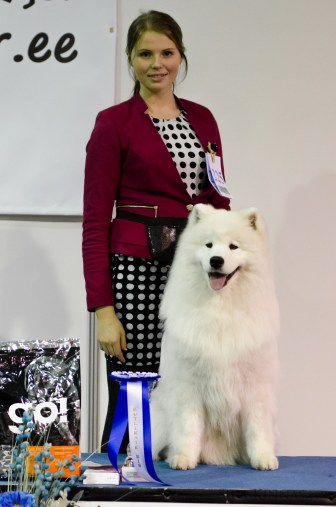 Puppy BIS, 2nd place, Samoyed