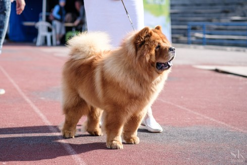 "International Dog Show ""Estonian Winner 2016"" in Tallinn"