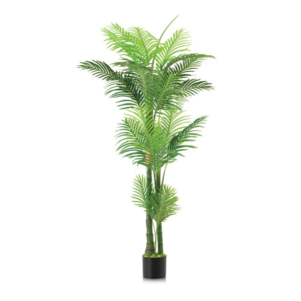 Preserved Palms Suppliers Uae Artificial Indoor Palm