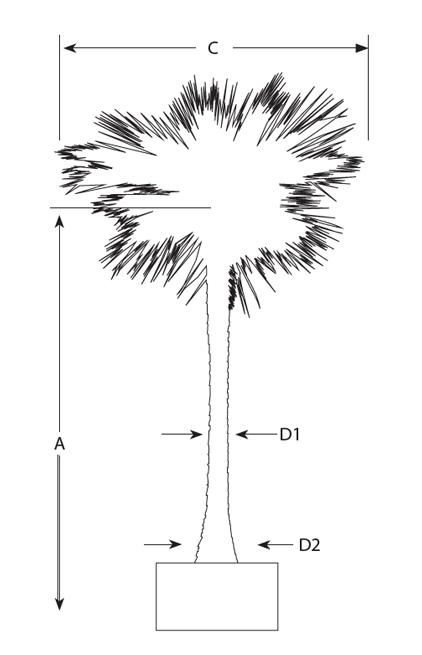 Preserved Washingtonia Palm Siji Greenhouse