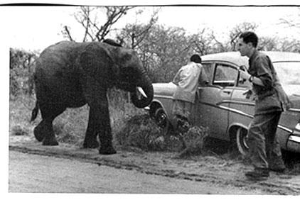 elephant3.jpg