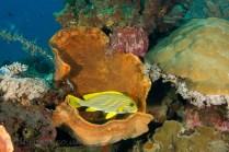 Bunaken marine park, North Sulawesi, Indonesia.