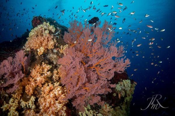 Coral reefs of bunaken