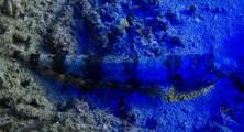 UV Eidechse-2482