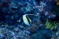 falterfisch-3011