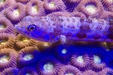 uv eidechsenfish 1-2678